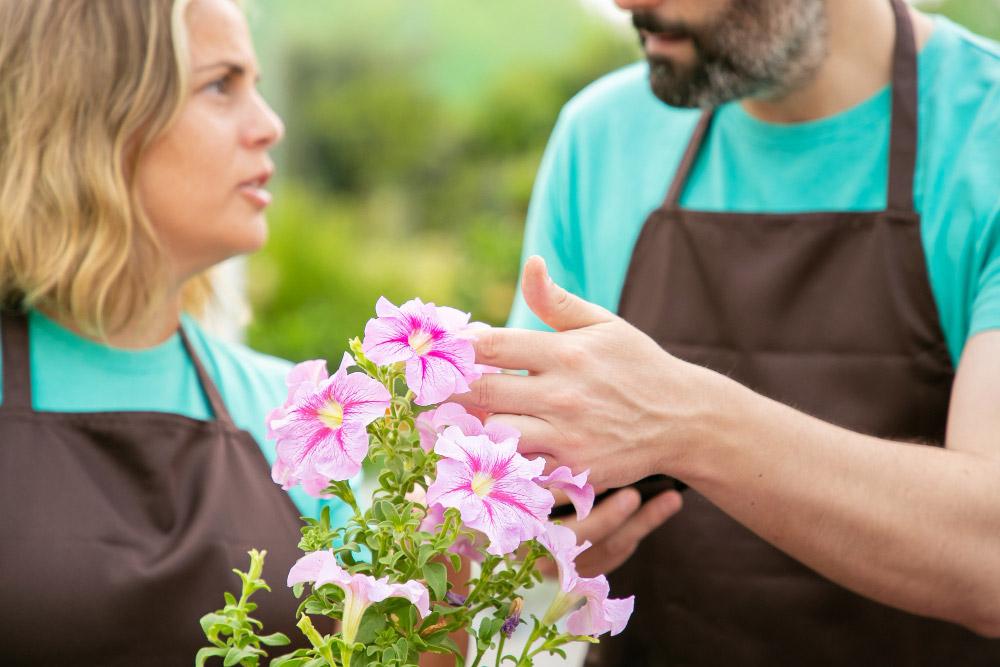 Comment cultiver le Petunia Pendula ?